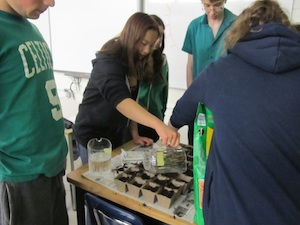 Blg_EarthWeek_TomatoPlant_10May2012