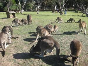 Urimbirra_Wildlife_Park